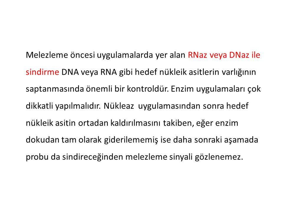 Melezleme öncesi uygulamalarda yer alan RNaz veya DNaz ile sindirme DNA veya RNA gibi hedef nükleik asitlerin varlığının saptanmasında önemli bir kont