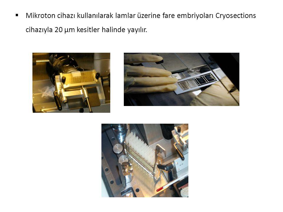 Slâytların hazırlanma şekli (sandviç); slâyt resminde slâyt ile kullanılan cam arasındaki boşluk 80 μm Slaytlar robota yerleştirilir ve Prehibridizasyon işlemi yapılır.