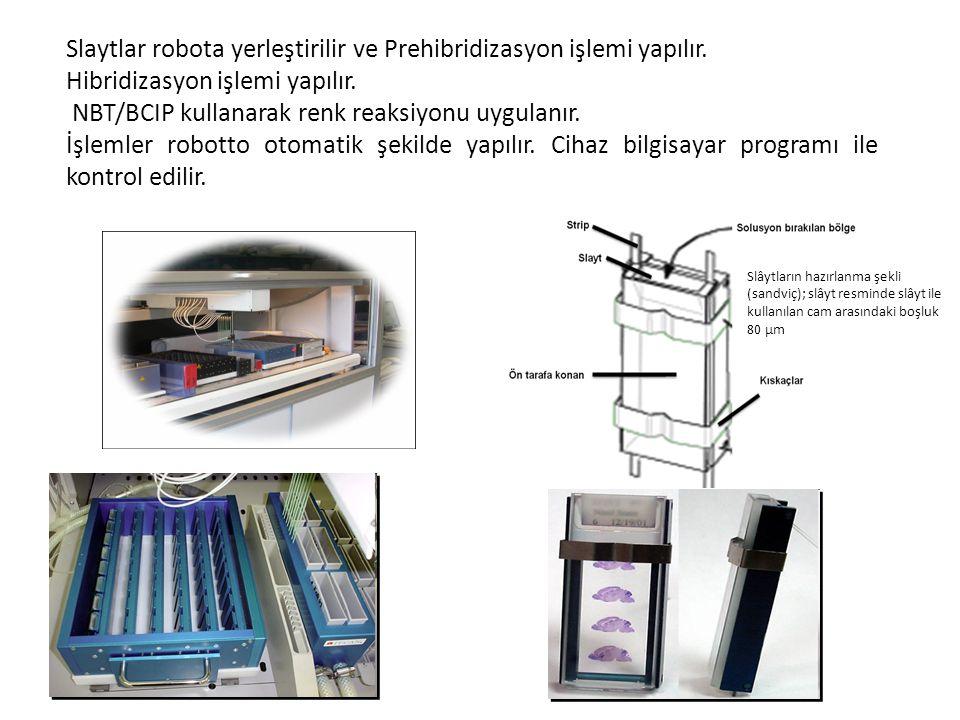 Slâytların hazırlanma şekli (sandviç); slâyt resminde slâyt ile kullanılan cam arasındaki boşluk 80 μm Slaytlar robota yerleştirilir ve Prehibridizasy