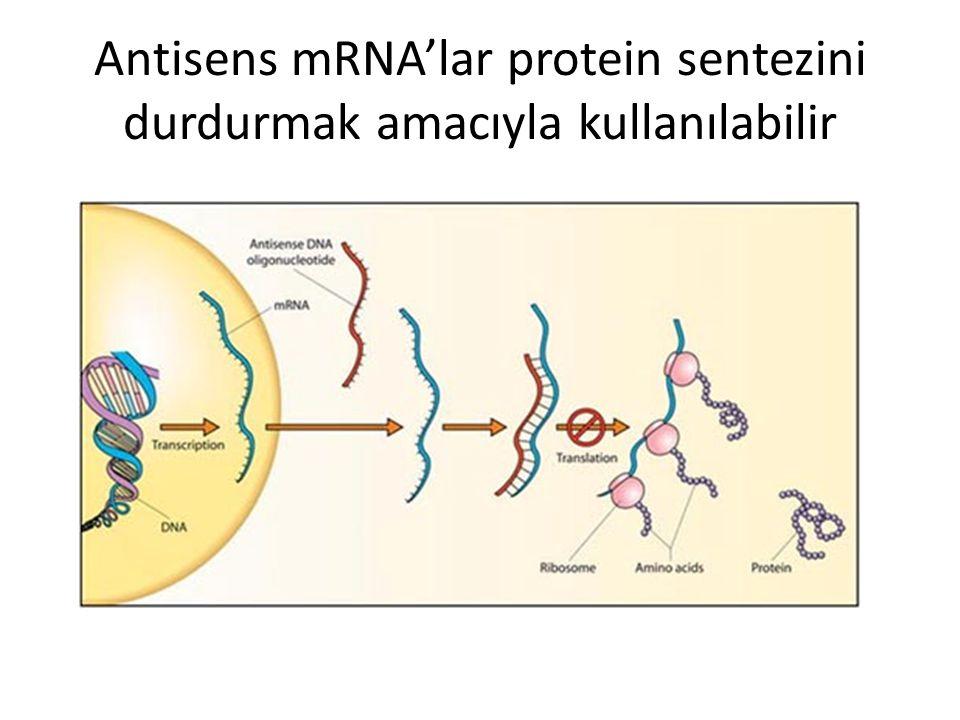 Antisens mRNA'lar protein sentezini durdurmak amacıyla kullanılabilir