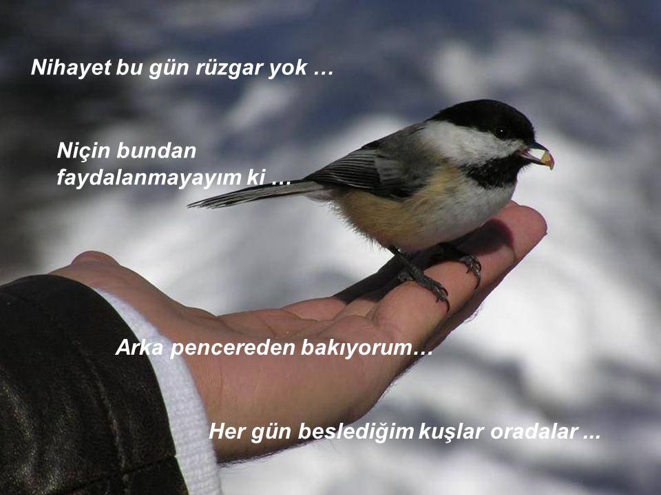 Nihayet bu gün rüzgar yok … Niçin bundan faydalanmayayım ki … Arka pencereden bakıyorum… Her gün beslediğim kuşlar oradalar...