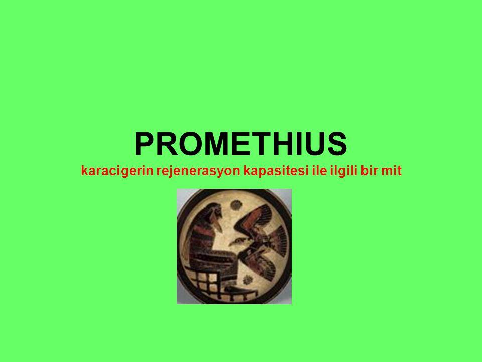 PROMETHIUS karacigerin rejenerasyon kapasitesi ile ilgili bir mit