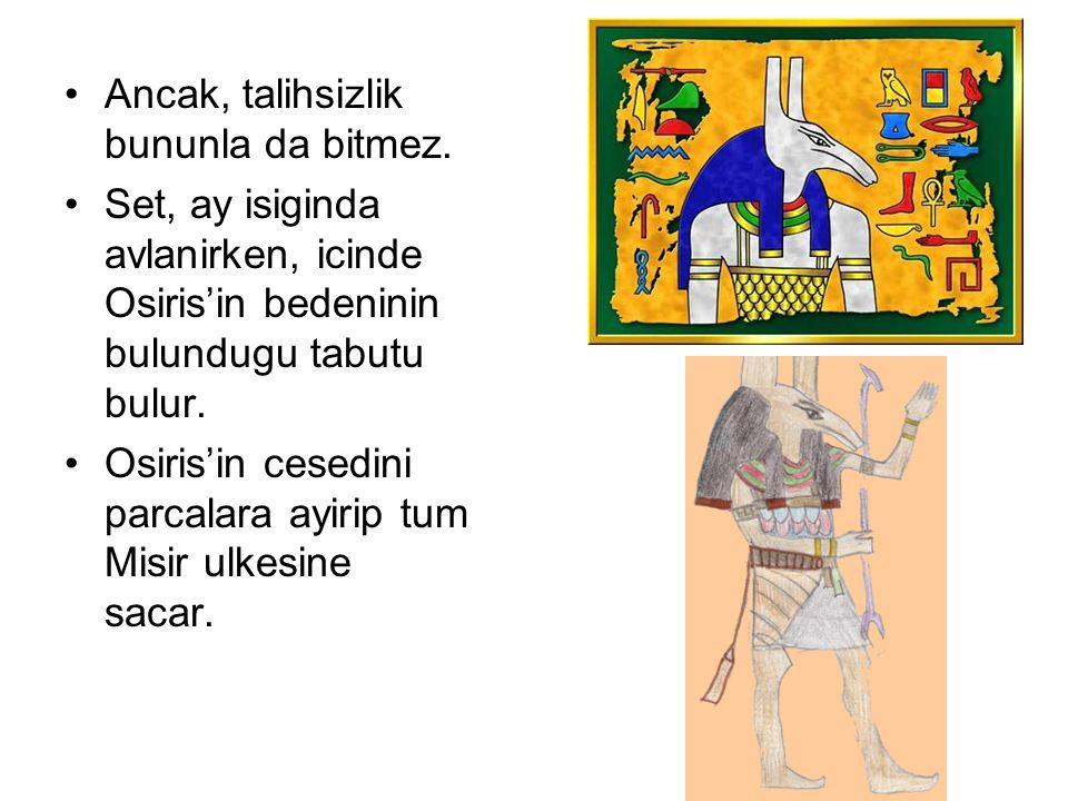 Ancak, talihsizlik bununla da bitmez. Set, ay isiginda avlanirken, icinde Osiris'in bedeninin bulundugu tabutu bulur. Osiris'in cesedini parcalara ayi