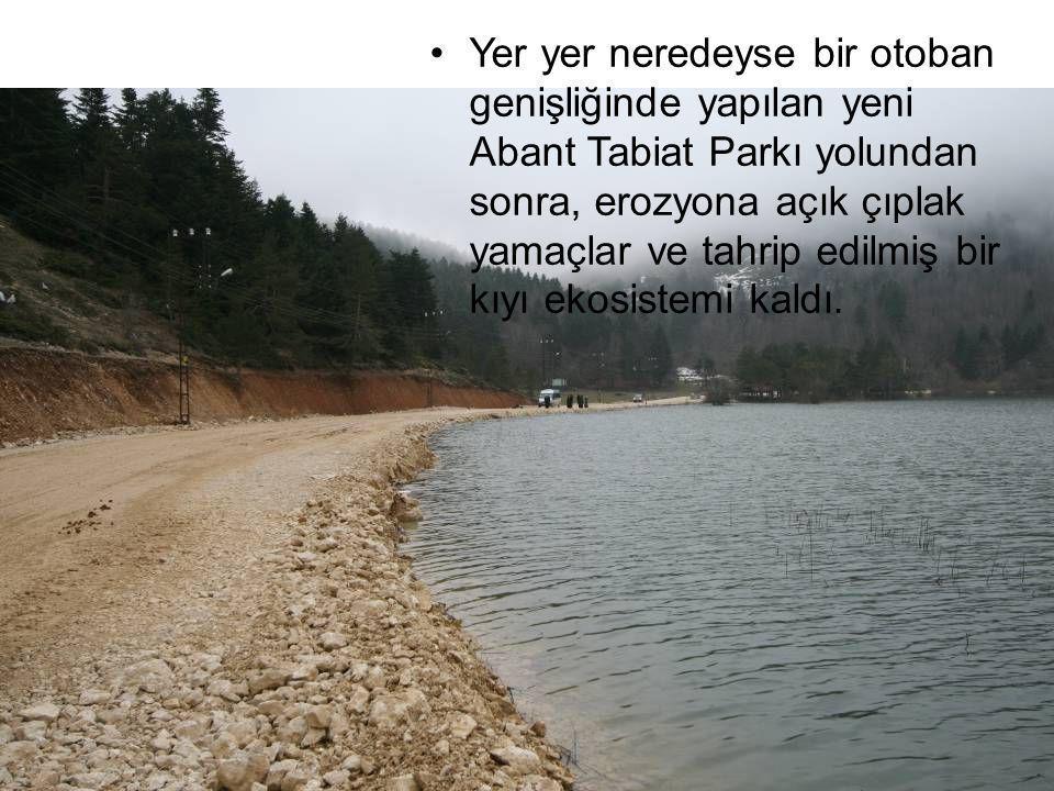 Yer yer neredeyse bir otoban genişliğinde yapılan yeni Abant Tabiat Parkı yolundan sonra, erozyona açık çıplak yamaçlar ve tahrip edilmiş bir kıyı ekosistemi kaldı.
