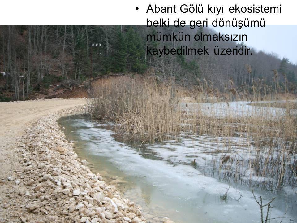 Abant Gölü kıyı ekosistemi belki de geri dönüşümü mümkün olmaksızın kaybedilmek üzeridir.