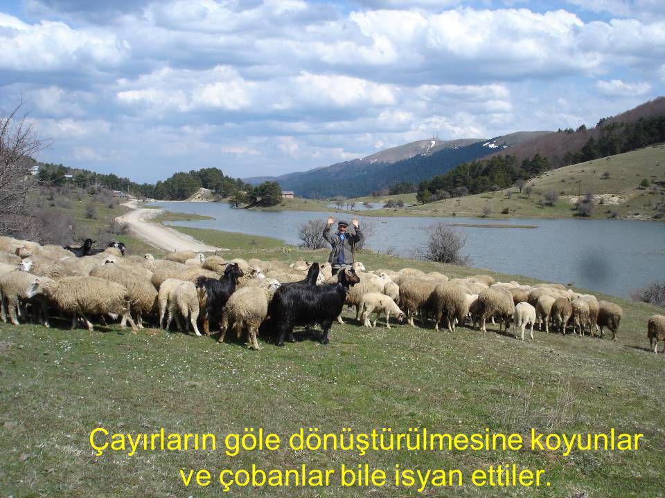 Çayırların göle dönüştürülmesine koyunlar ve çobanlar bile isyan ettiler.