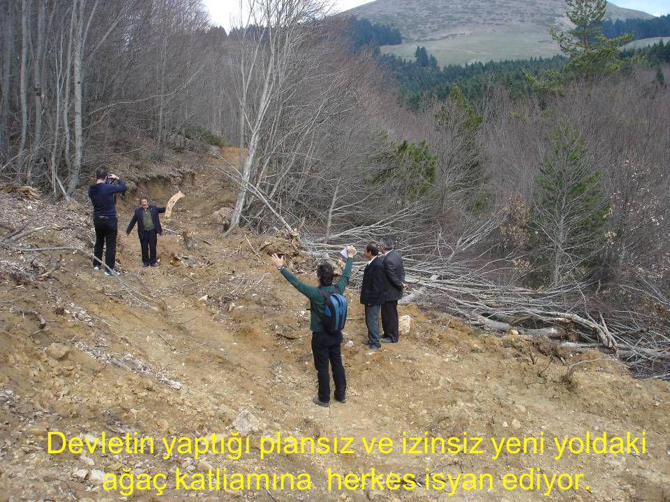 Devletin yaptığı plansız ve izinsiz yeni yoldaki ağaç katliamına herkes isyan ediyor.