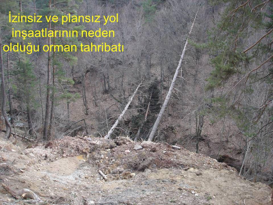 İzinsiz ve plansız yol inşaatlarının neden olduğu orman tahribatı