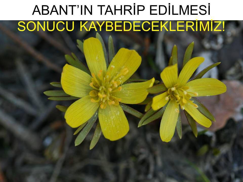 ABANT'IN TAHRİP EDİLMESİ SONUCU KAYBEDECEKLERİMİZ!