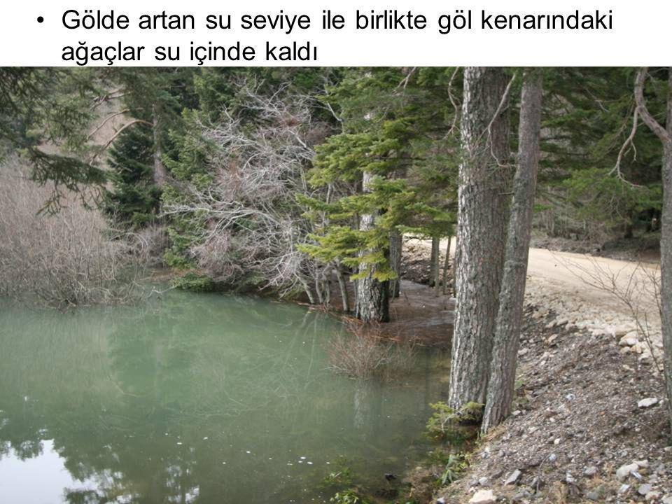 Gölde artan su seviye ile birlikte göl kenarındaki ağaçlar su içinde kaldı