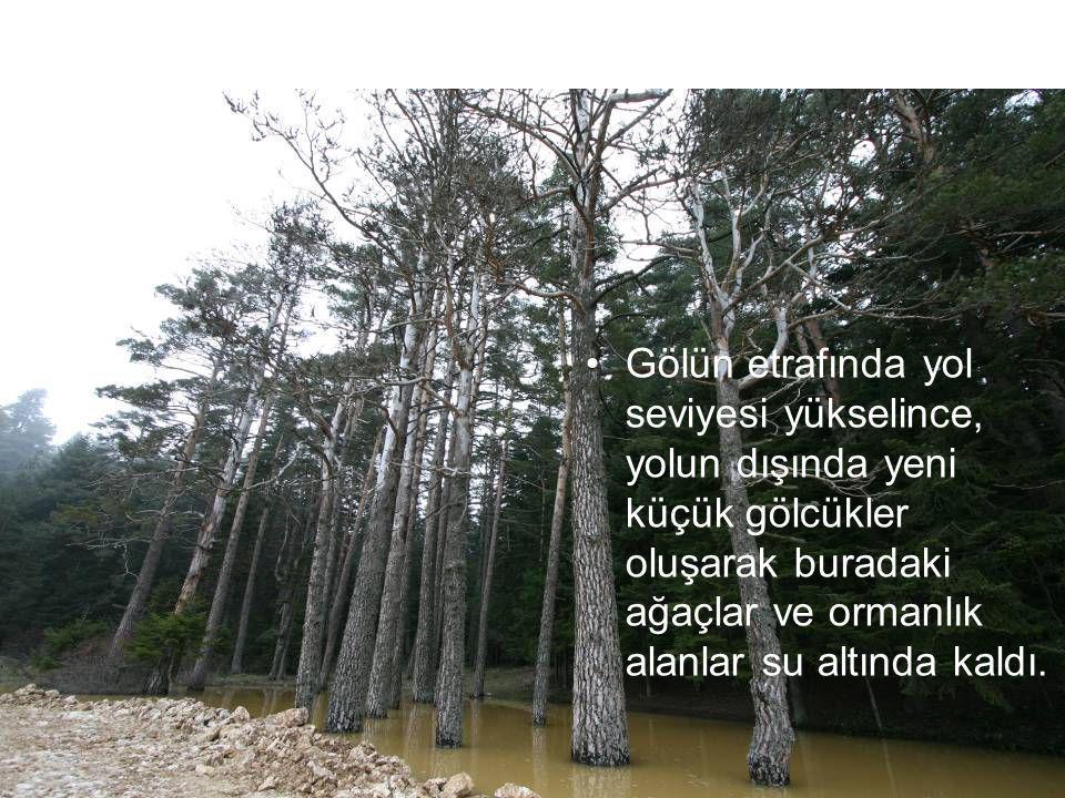 Gölün etrafında yol seviyesi yükselince, yolun dışında yeni küçük gölcükler oluşarak buradaki ağaçlar ve ormanlık alanlar su altında kaldı.