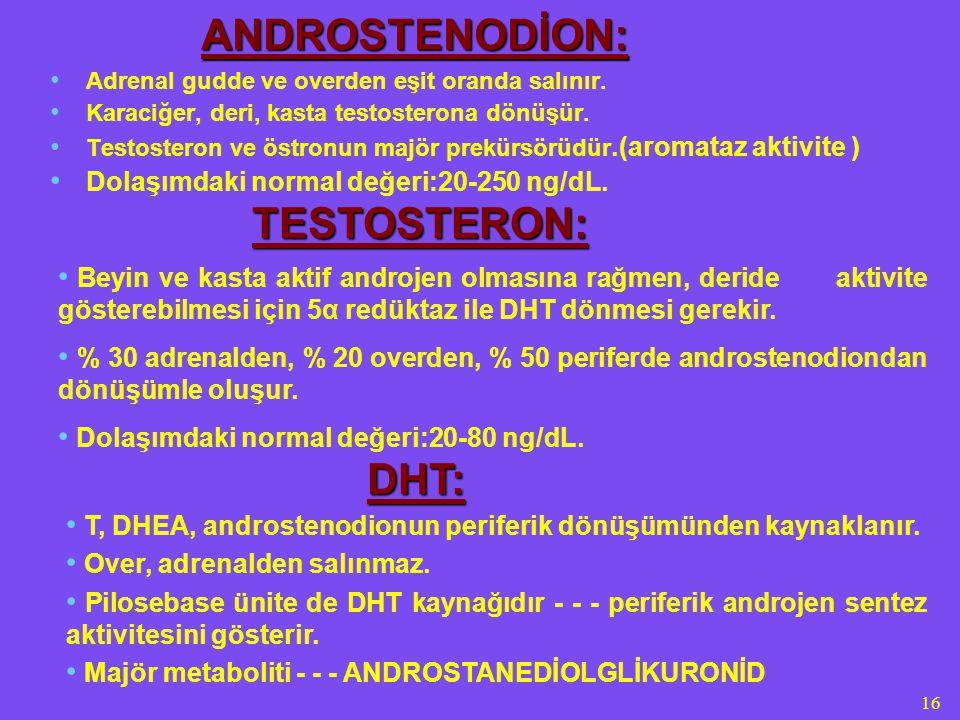 16 ANDROSTENODİON: Adrenal gudde ve overden eşit oranda salınır. Karaciğer, deri, kasta testosterona dönüşür. Testosteron ve östronun majör prekürsörü