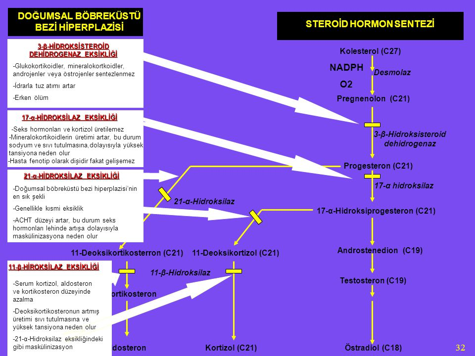 32 STEROİD HORMON SENTEZİ Kolesterol (C27) Desmolaz Pregnenolon (C21) Progesteron (C21) 3-β-Hidroksisteroid dehidrogenaz 17-α hidroksilaz 17-α-Hidroksiprogesteron (C21) Androstenedion (C19) Östradiol (C18) NADPH O2 Testosteron (C19) 11-Deoksikortizol (C21) 21-α-Hidroksilaz 11-Deoksikortikosterron (C21) 11-β-Hidroksilaz Kortikosteron Kortizol (C21)Aldosteron DOĞUMSAL BÖBREKÜSTÜ BEZİ HİPERPLAZİSİ 3-β-HİDROKSİSTEROİD DEHİDROGENAZ EKSİKLİĞİ -Glukokortikoidler, mineralokortkoidler, androjenler veya östrojenler sentezlenmez -İdrarla tuz atımı artar -Erken ölüm 17-α-HİDROKSİLAZ EKSİKLİĞİ -Seks hormonları ve kortizol üretilemez -Mineralokortikoidlerin üretimi artar, bu durum sodyum ve sıvı tutulmasına,dolayısıyla yüksek tansiyona neden olur -Hasta fenotip olarak dişidir fakat gelişemez 21-α-HİDROKSİLAZ EKSİKLİĞİ -Doğumsal böbreküstü bezi hiperplazisi'nin en sık şekli -Genellikle kısmi eksiklik -ACHT düzeyi artar, bu durum seks hormonları lehinde artışa dolayısıyla maskülinizasyona neden olur 11-β-HİROKSİLAZ EKSİKLİĞİ -Serum kortizol, aldosteron ve kortikosteron düzeyinde azalma -Deoksikortikosteronun artmış üretimi sıvı tutulmasına ve yüksek tansiyona neden olur -21-α-Hidroksilaz eksikliğindeki gibi maskülinizasyon