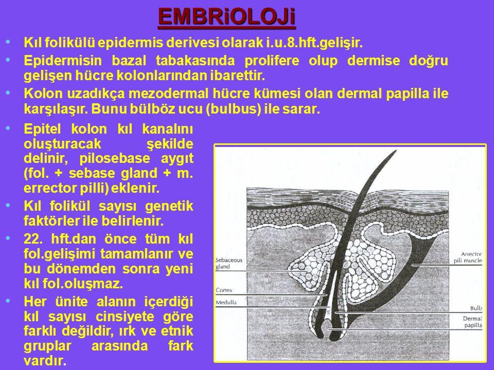 Kıl folikülü epidermis derivesi olarak i.u.8.hft.gelişir. Epidermisin bazal tabakasında prolifere olup dermise doğru gelişen hücre kolonlarından ibare