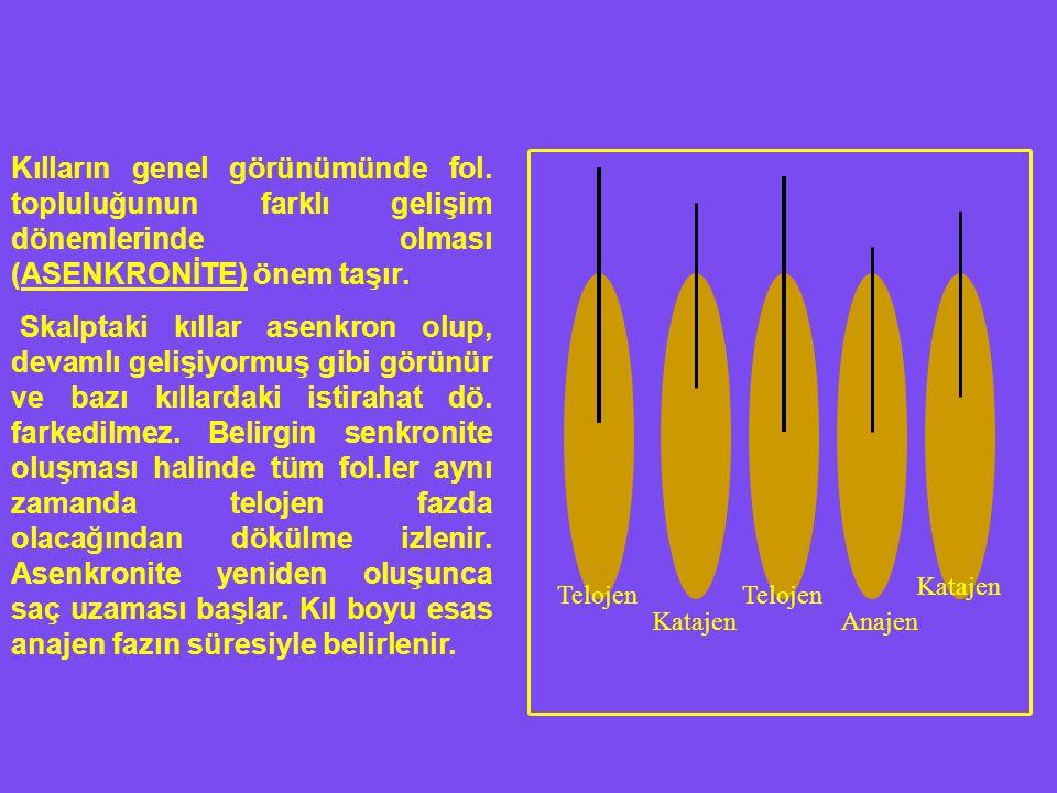 Telojen Katajen Telojen Anajen Katajen Kılların genel görünümünde fol. topluluğunun farklı gelişim dönemlerinde olması (ASENKRONİTE) önem taşır. Skalp