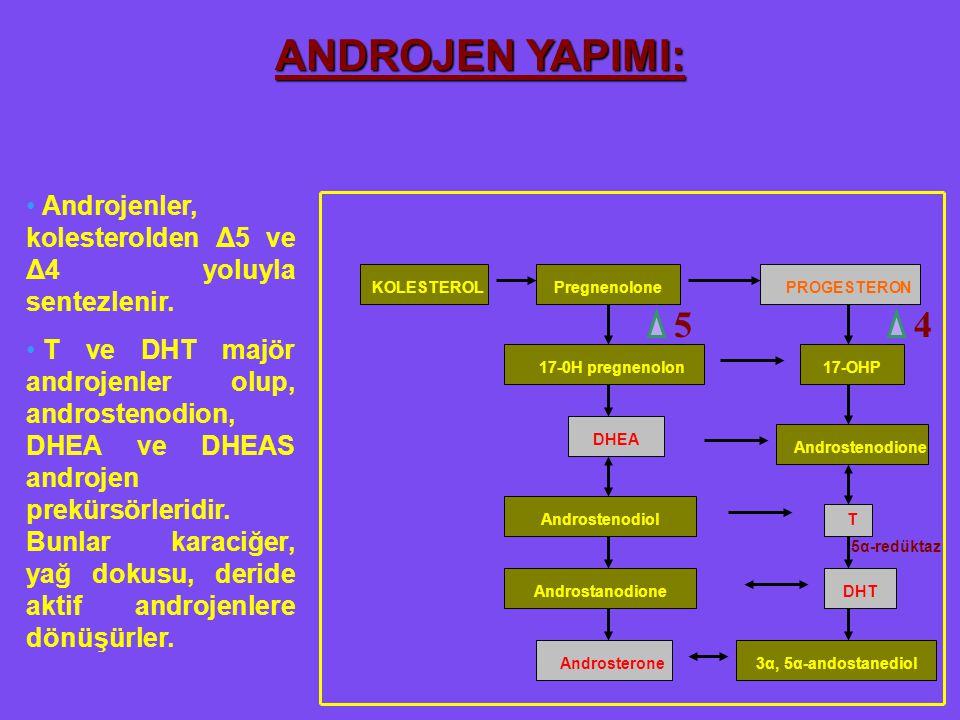 54 ANDROJEN YAPIMI: Androjenler, kolesterolden Δ5 ve Δ4 yoluyla sentezlenir. T ve DHT majör androjenler olup, androstenodion, DHEA ve DHEAS androjen p