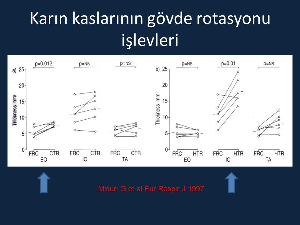 Karın kaslarının gövde rotasyonu işlevleri Misuri G et al Eur Respir J 1997