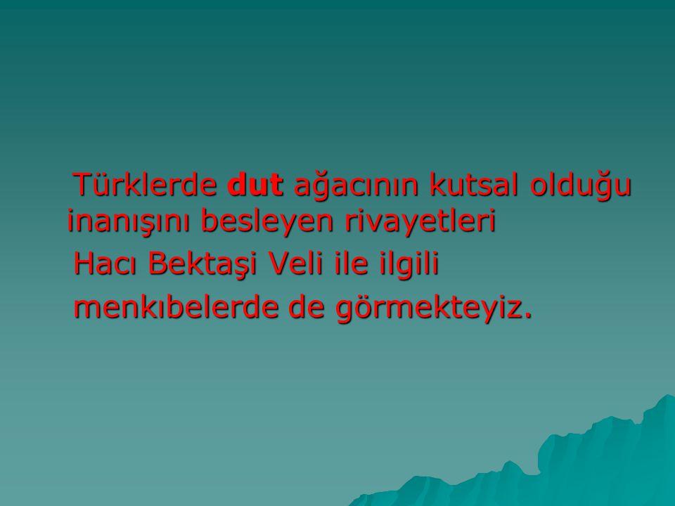 Türklerde dut ağacının kutsal olduğu inanışını besleyen rivayetleri Türklerde dut ağacının kutsal olduğu inanışını besleyen rivayetleri Hacı Bektaşi V