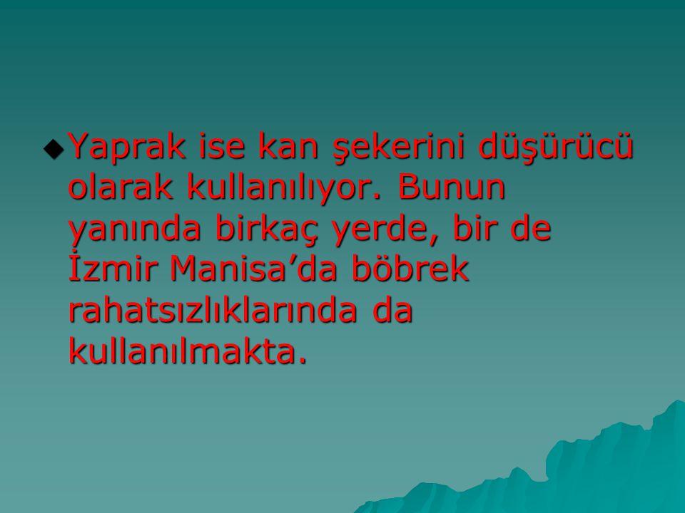  Yaprak ise kan şekerini düşürücü olarak kullanılıyor. Bunun yanında birkaç yerde, bir de İzmir Manisa'da böbrek rahatsızlıklarında da kullanılmakta.