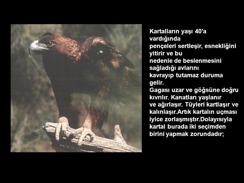 Kartallar, kuş türleri içinde en uzun yaşayanıdır. 70 yıla kadar yaşayan kartallar vardır. Ancak bu yaşa ulaşmak için, 40 yaşındayken çok ciddi ve zor