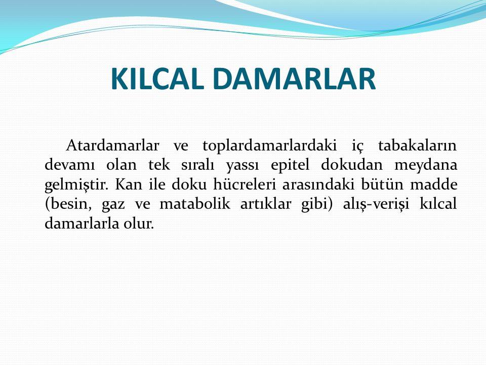 KILCAL DAMARLAR Atardamarlar ve toplardamarlardaki iç tabakaların devamı olan tek sıralı yassı epitel dokudan meydana gelmiştir. Kan ile doku hücreler