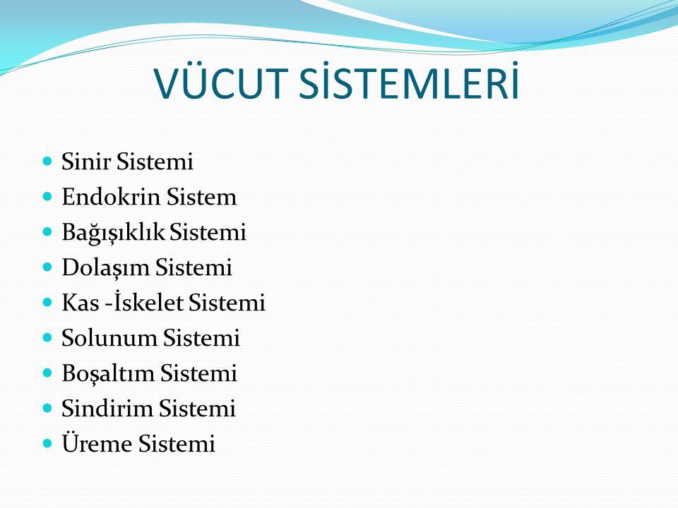 VÜCUT SİSTEMLERİ Sinir Sistemi Endokrin Sistem Bağışıklık Sistemi Dolaşım Sistemi Kas -İskelet Sistemi Solunum Sistemi Boşaltım Sistemi Sindirim Siste