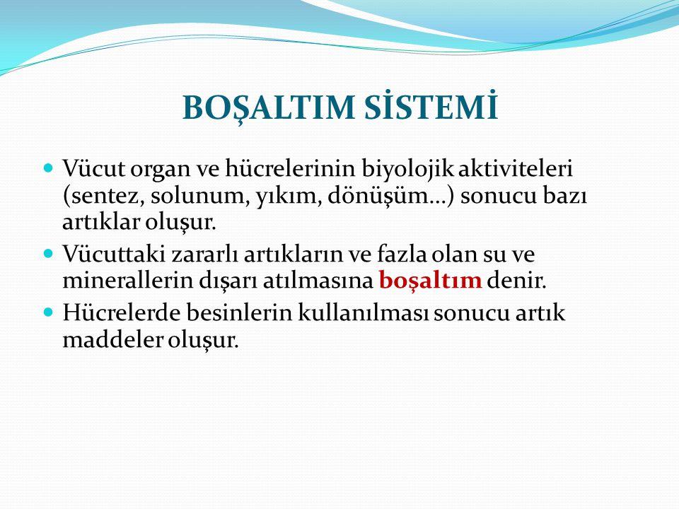 BOŞALTIM SİSTEMİ Vücut organ ve hücrelerinin biyolojik aktiviteleri (sentez, solunum, yıkım, dönüşüm…) sonucu bazı artıklar oluşur. Vücuttaki zararlı