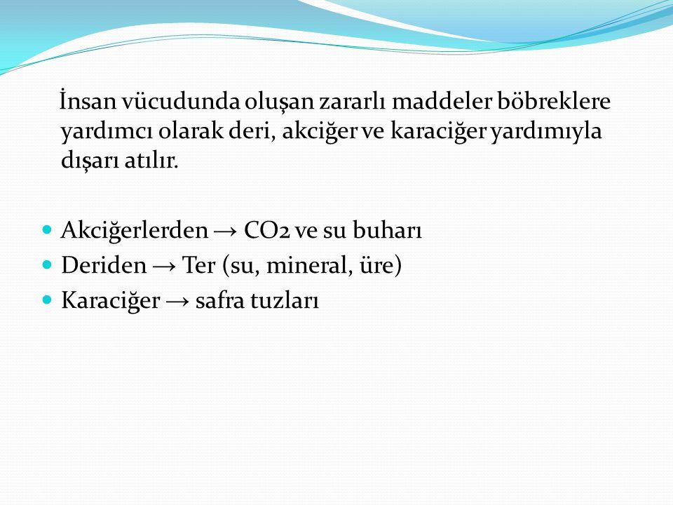 İnsan vücudunda oluşan zararlı maddeler böbreklere yardımcı olarak deri, akciğer ve karaciğer yardımıyla dışarı atılır. Akciğerlerden → CO2 ve su buha
