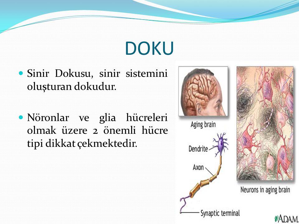 DOKU Sinir Dokusu, sinir sistemini oluşturan dokudur. Nöronlar ve glia hücreleri olmak üzere 2 önemli hücre tipi dikkat çekmektedir.