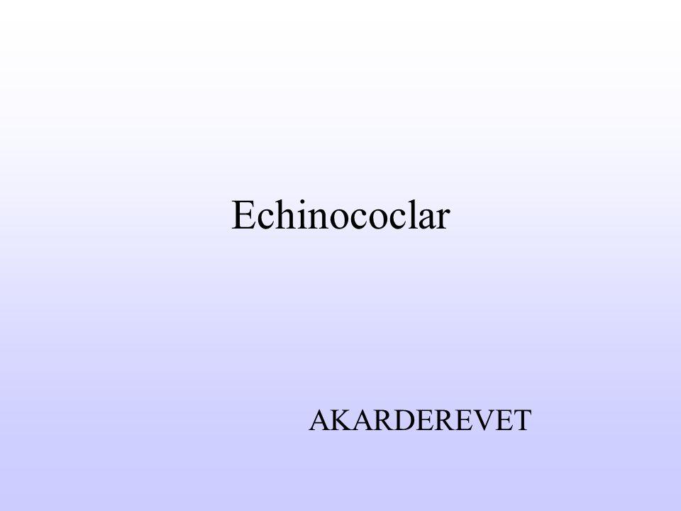 Echinococcosis Yurdumuzda insan açısından önemli iki tür Echinococcus bulunmaktadır; - Echinococcus granulosus: Cystic echinococcosis - Echinococcus multilocularis: Alveolar echinococcosis İnsan bu parazitler için ara konak durumundadır.