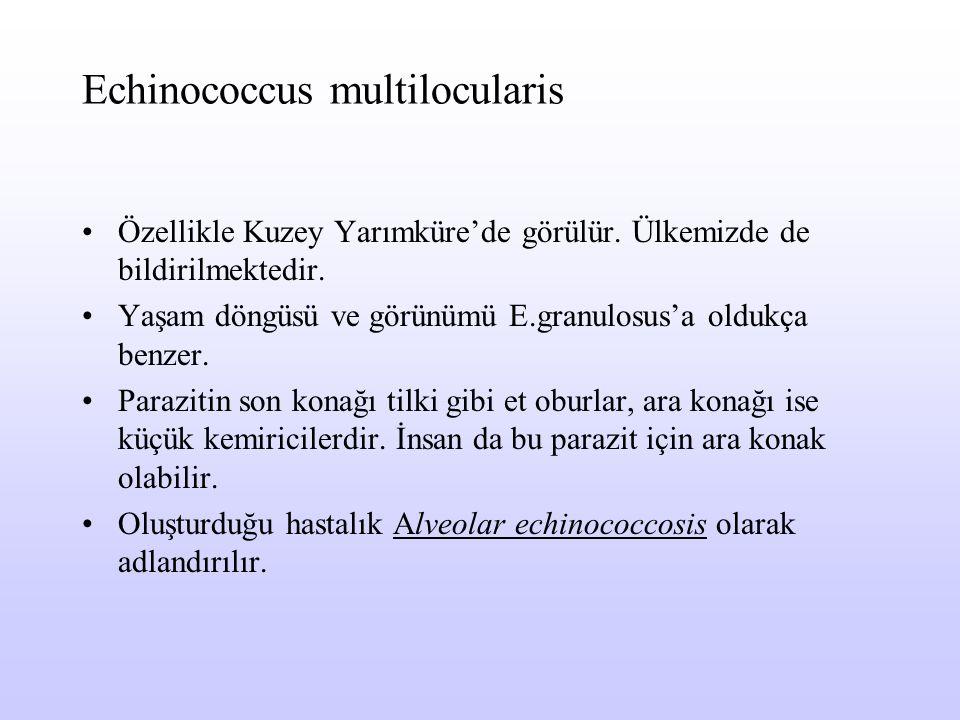 Echinococcus multilocularis Özellikle Kuzey Yarımküre'de görülür. Ülkemizde de bildirilmektedir. Yaşam döngüsü ve görünümü E.granulosus'a oldukça benz