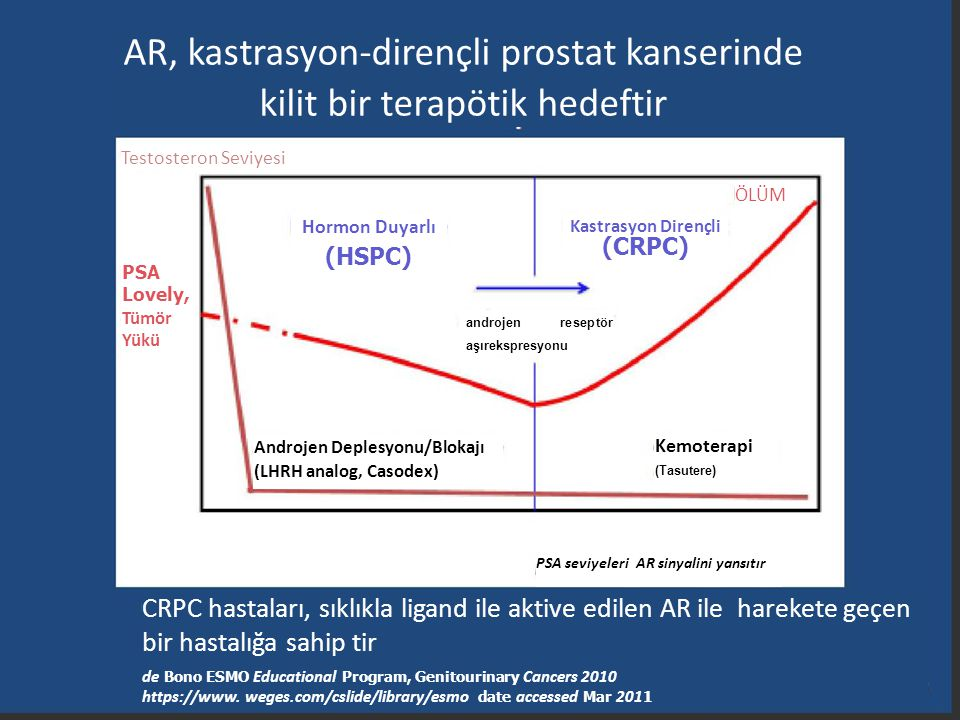 AR, kastrasyon-dirençli prostat kanserinde kilit bir terapötik hedeftir Testosteron Seviyesi Hormon Duyarlı (HSPC) ÖLÜM Kastrasyon Dirençli (CRPC) and