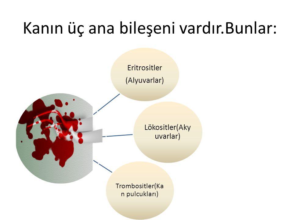 Kanın üç ana bileşeni vardır.Bunlar: Eritrositler (Alyuvarlar) Lökositler(Aky uvarlar) Trombositler(Ka n pulcukları)