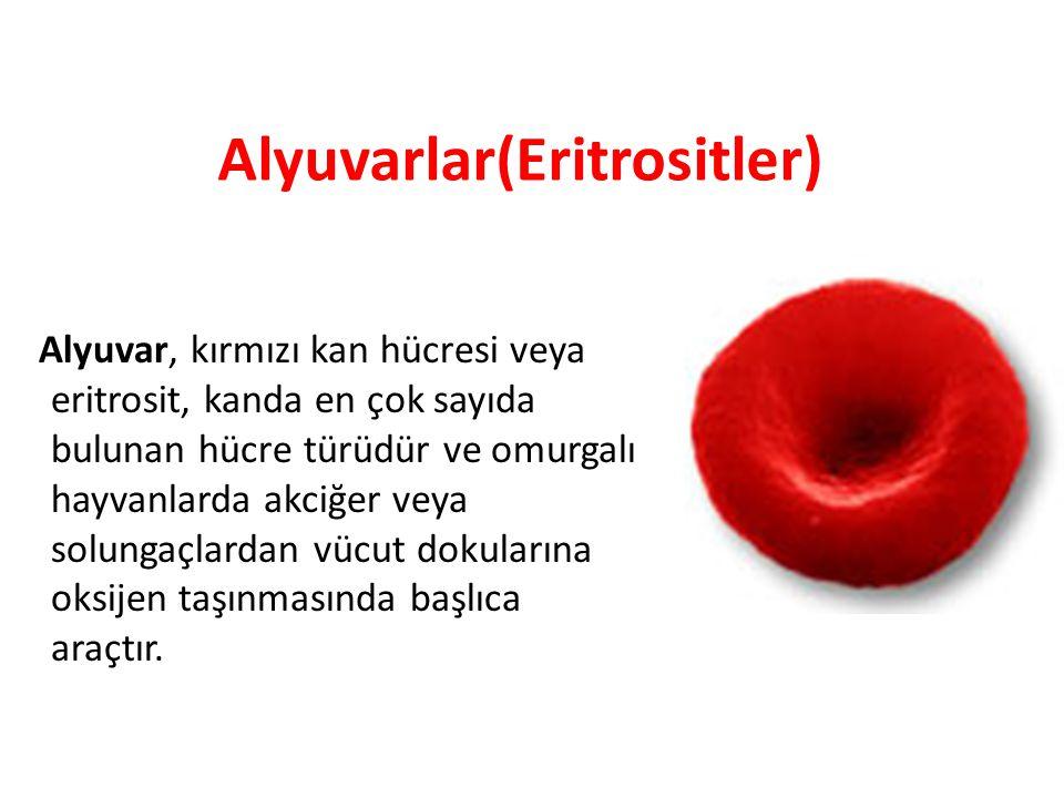 Alyuvarlar(Eritrositler) Alyuvar, kırmızı kan hücresi veya eritrosit, kanda en çok sayıda bulunan hücre türüdür ve omurgalı hayvanlarda akciğer veya s