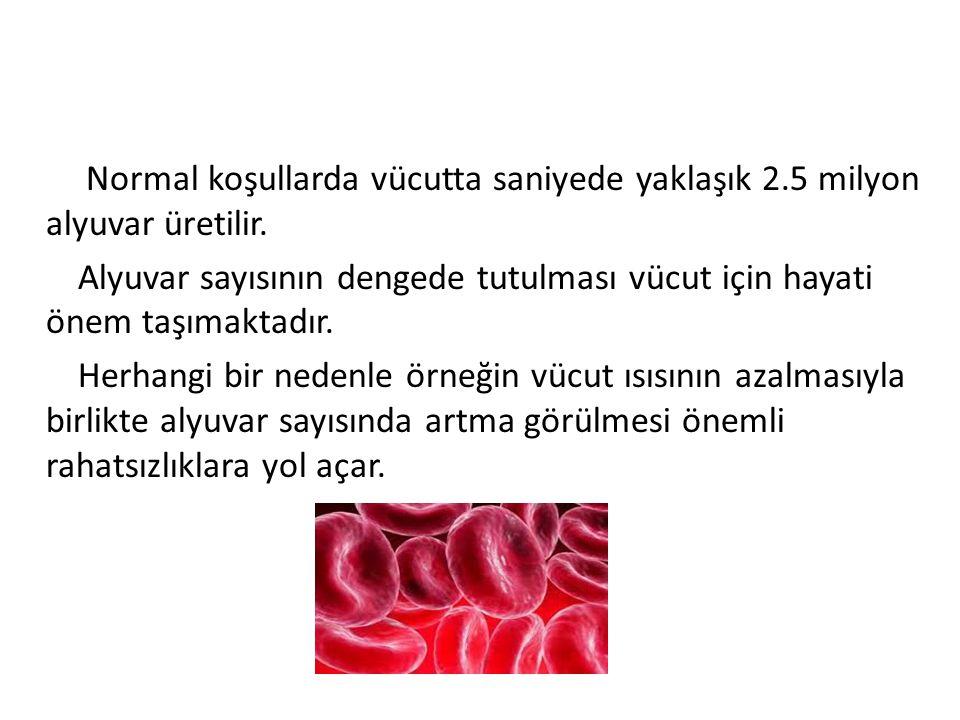 Vücut ısısı aşırı düştüğünde kan sıvısının azalmasına karşılık, alyuvar sayısı aynı kalır.
