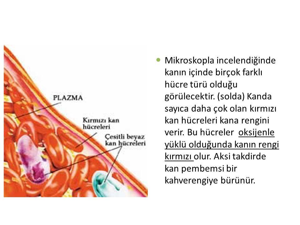 Agranülositler (Lenfositler): Bu tip hücrelerin görevleri dolaylı savunma sağlayan maddeleri yapmaktır.