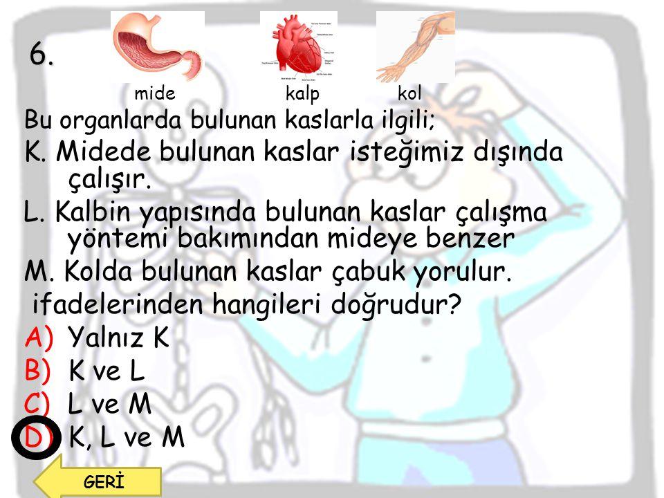 mide kalp kol Bu organlarda bulunan kaslarla ilgili; K. Midede bulunan kaslar isteğimiz dışında çalışır. L. Kalbin yapısında bulunan kaslar çalışma yö