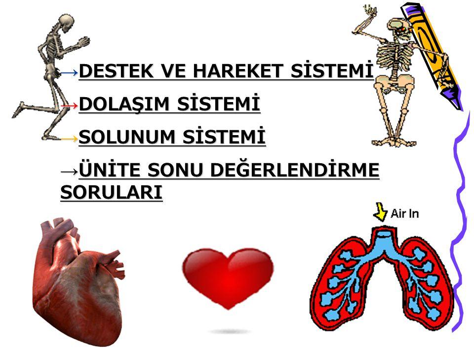 4.Büyük kan dolaşımı kalbin sol karıncığında başlar.