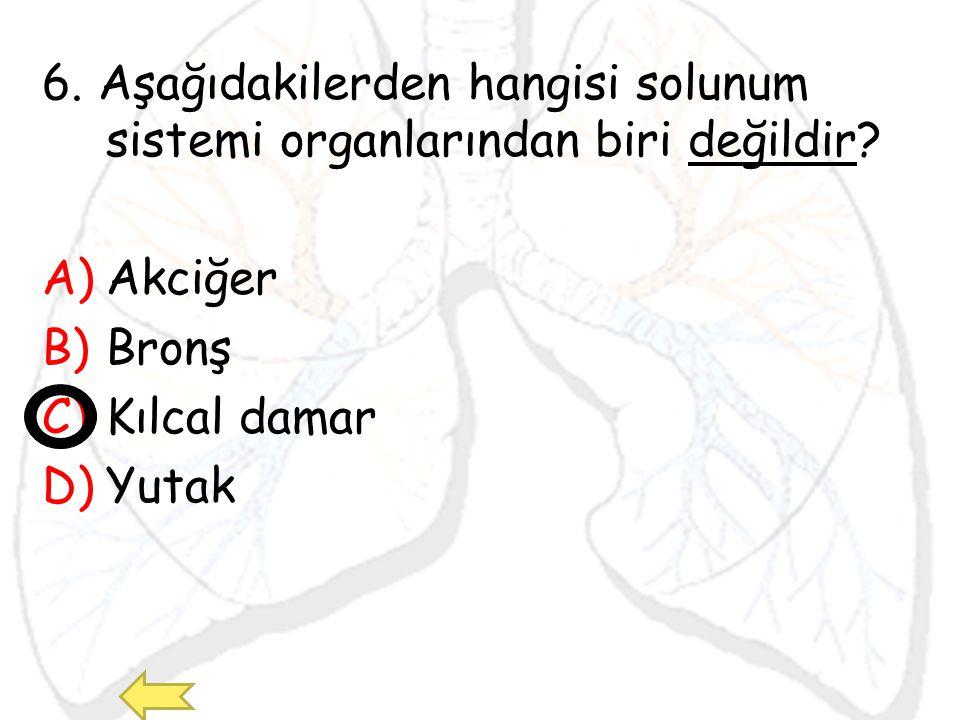 6. Aşağıdakilerden hangisi solunum sistemi organlarından biri değildir? A)Akciğer B)Bronş C)Kılcal damar D)Yutak