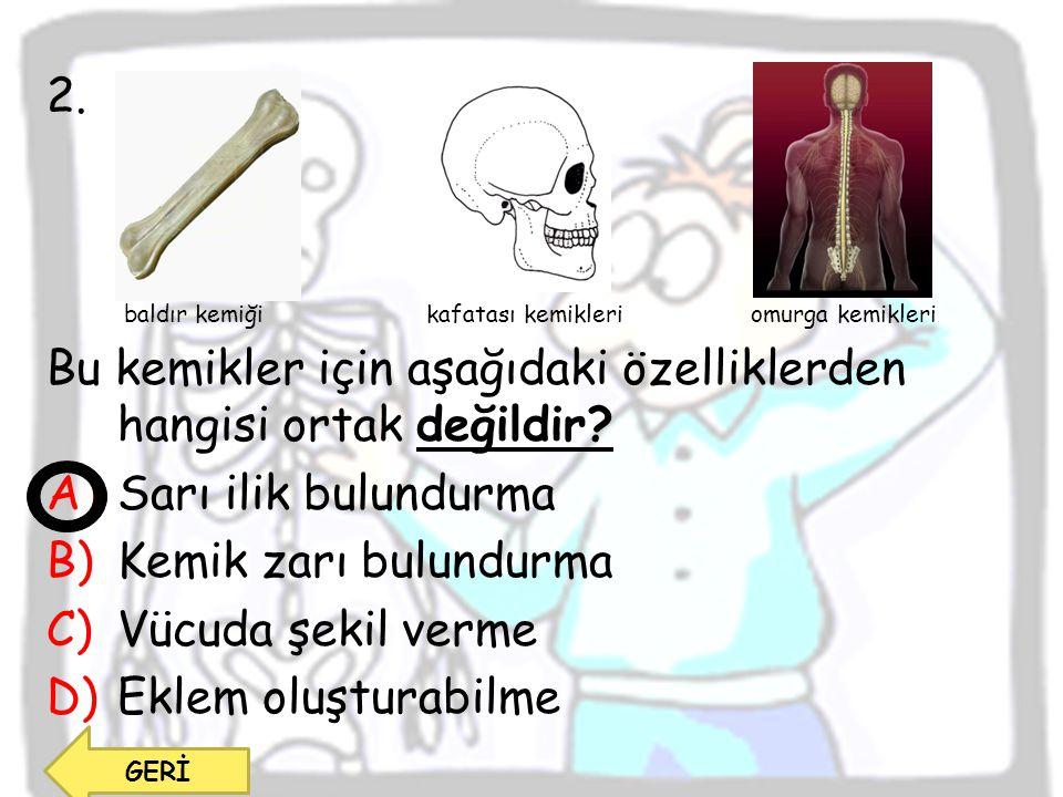 2. baldır kemiği kafatası kemikleri omurga kemikleri Bu kemikler için aşağıdaki özelliklerden hangisi ortak değildir? A)Sarı ilik bulundurma B)Kemik z
