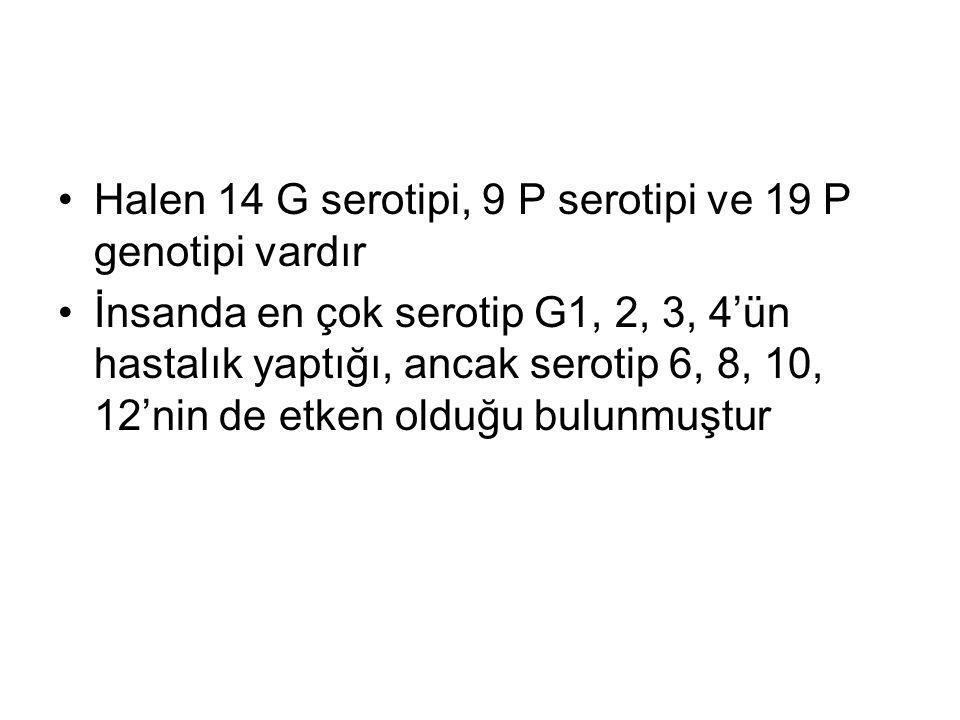 Halen 14 G serotipi, 9 P serotipi ve 19 P genotipi vardır İnsanda en çok serotip G1, 2, 3, 4'ün hastalık yaptığı, ancak serotip 6, 8, 10, 12'nin de et