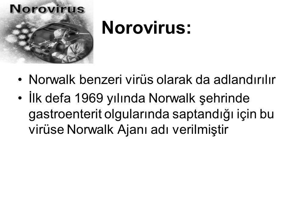 Norovirus: Norwalk benzeri virüs olarak da adlandırılır İlk defa 1969 yılında Norwalk şehrinde gastroenterit olgularında saptandığı için bu virüse Nor
