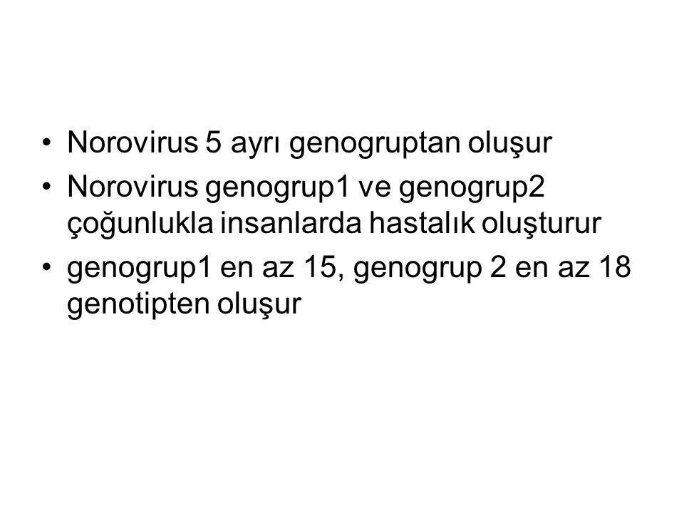 Norovirus 5 ayrı genogruptan oluşur Norovirus genogrup1 ve genogrup2 çoğunlukla insanlarda hastalık oluşturur genogrup1 en az 15, genogrup 2 en az 18