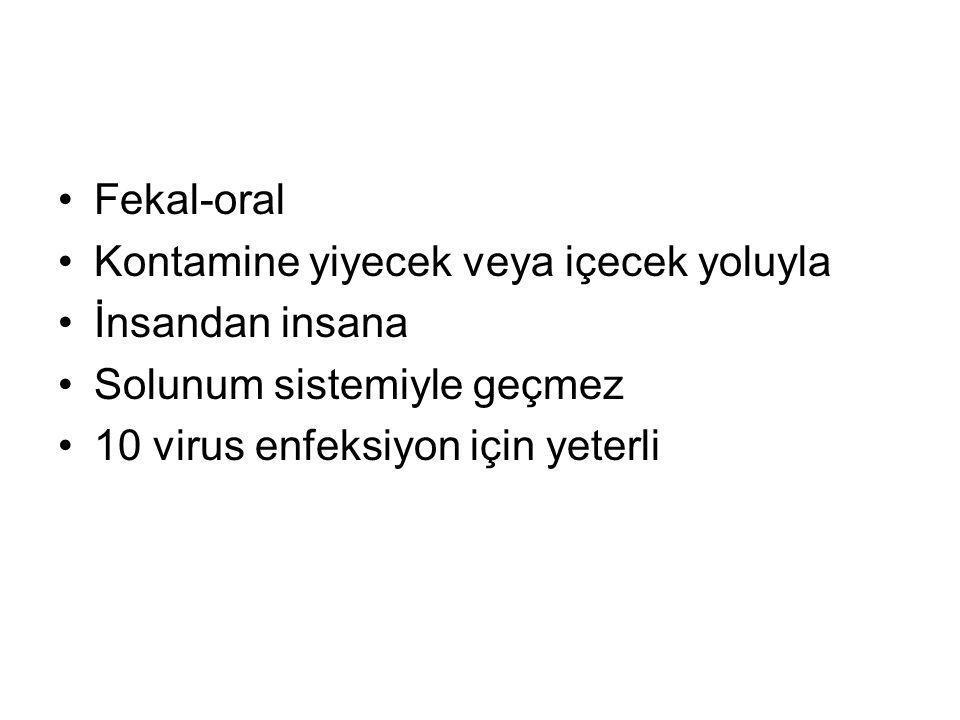 Fekal-oral Kontamine yiyecek veya içecek yoluyla İnsandan insana Solunum sistemiyle geçmez 10 virus enfeksiyon için yeterli