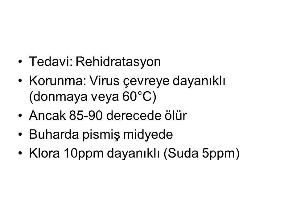 Tedavi: Rehidratasyon Korunma: Virus çevreye dayanıklı (donmaya veya 60°C) Ancak 85-90 derecede ölür Buharda pismiş midyede Klora 10ppm dayanıklı (Sud