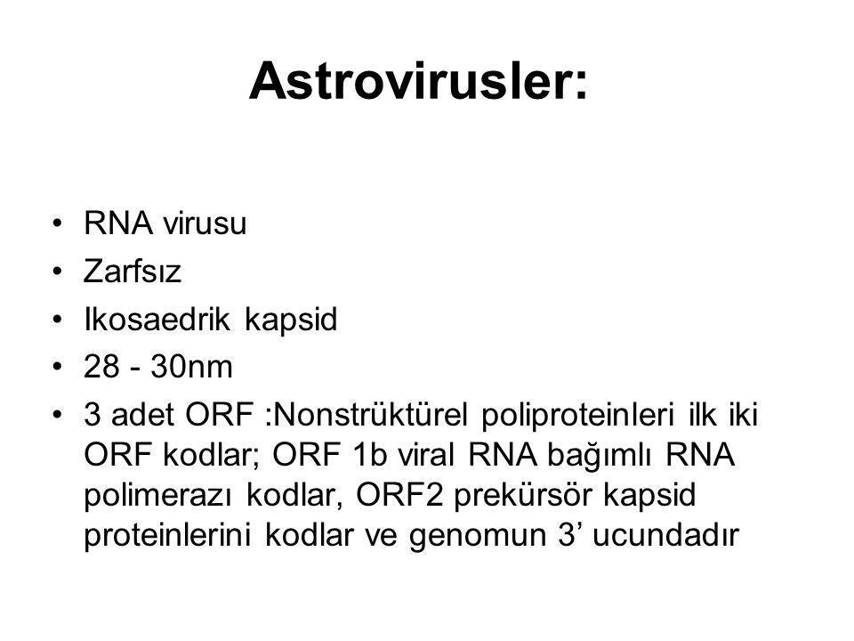 Astrovirusler: RNA virusu Zarfsız Ikosaedrik kapsid 28 - 30nm 3 adet ORF :Nonstrüktürel poliproteinleri ilk iki ORF kodlar; ORF 1b viral RNA bağımlı R