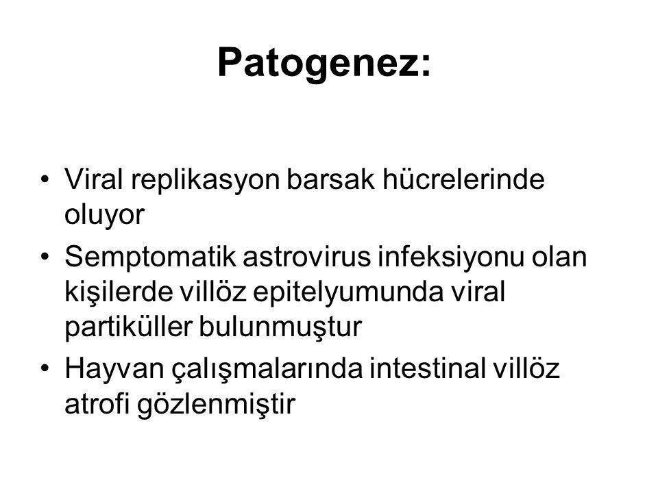 Patogenez: Viral replikasyon barsak hücrelerinde oluyor Semptomatik astrovirus infeksiyonu olan kişilerde villöz epitelyumunda viral partiküller bulun