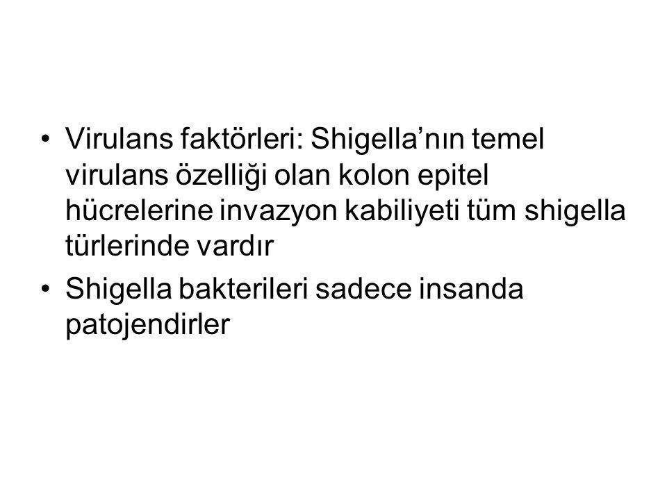 Virulans faktörleri: Shigella'nın temel virulans özelliği olan kolon epitel hücrelerine invazyon kabiliyeti tüm shigella türlerinde vardır Shigella ba