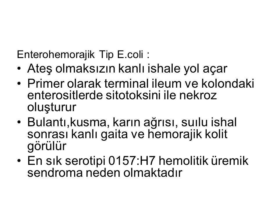 Enterohemorajik Tip E.coli : Ateş olmaksızın kanlı ishale yol açar Primer olarak terminal ileum ve kolondaki enterositlerde sitotoksini ile nekroz olu