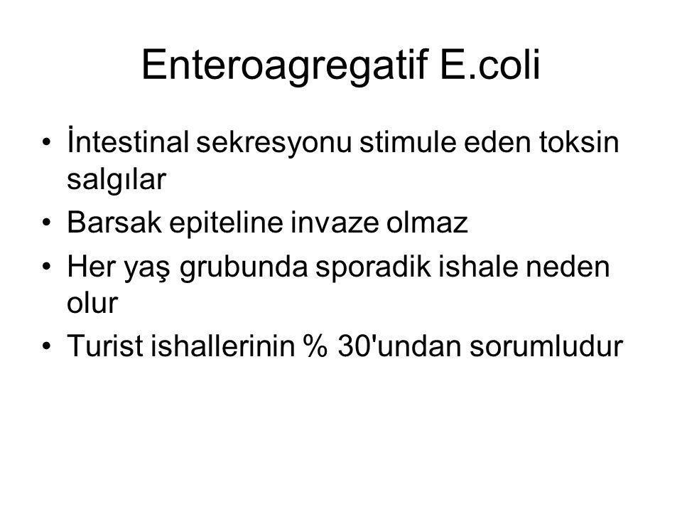 Enteroagregatif E.coli İntestinal sekresyonu stimule eden toksin salgılar Barsak epiteline invaze olmaz Her yaş grubunda sporadik ishale neden olur Tu